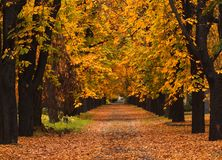 Autumn alley. Photo of an autumn alley in the countryside Stock Photos