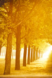 Autumn alley Royalty Free Stock Images
