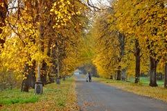 Autumn alley. Beautiful alley in park, golden autumn Stock Photography