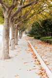 Autumn alley. Beautiful pathway in the autumn alley Stock Images