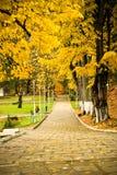 Autumn alley. An autumn alley in Slanic Moldova park Royalty Free Stock Photos