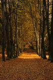 Autumn Alley. With several trees, a lot of leaves on the ground, season-autumn/fall, sunny day Royalty Free Stock Photos