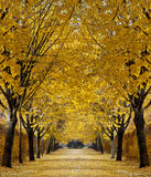 Autumn alley Royalty Free Stock Photos