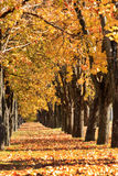 Autumn alley. In the parrk Royalty Free Stock Images
