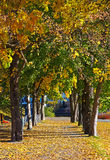Autumn alley. In the park Stock Photography