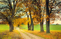 Autumn alley. With yellow leaves Royalty Free Stock Images