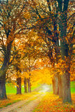 Autumn alley Stock Images