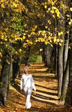 Autumn alley. With sunlight and shadows Royalty Free Stock Photos