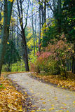 Autumn alley. With yellow leaves Royalty Free Stock Photos