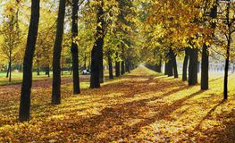 Autumn alley. Beautiful autumn alley at daylight royalty free stock photography