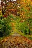 Autumn Alley Imagem de Stock