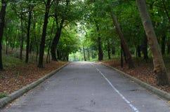 Autumn Alley Immagine Stock Libera da Diritti