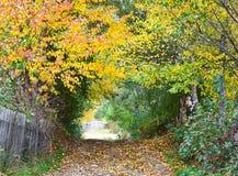 Autumn Alley Fotografie Stock
