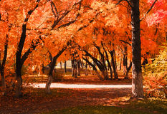 Autumn Alley Stockbilder