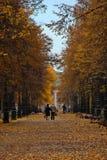 Autumn Alley Stockfoto