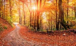 Autumn Alley Stock Afbeeldingen