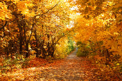 Autumn alley. The road through the autumnal park. Yellow trees Royalty Free Stock Photo
