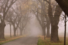 Autumn alley. An alley bordered by trees in a foggy autumnal day in Bayern royalty free stock photos