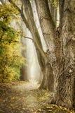 Autumn Alley Fotografia de Stock
