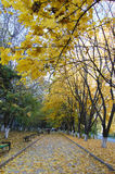 Autumn Alley Imagem de Stock Royalty Free