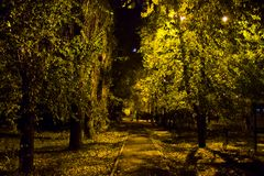 Autumn alley. In the light of a street lamp Stock Photo