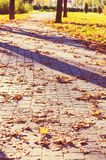 Autumn alley Royalty Free Stock Photography