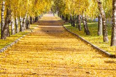 Autumn alley Stock Image