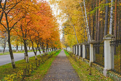 Autumn alley Royalty Free Stock Photo