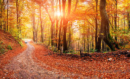 Autumn alley. Car on a forest path. autumn alley Stock Images