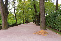 Autumn alley in the Catherine Park. Tsarskoye Selo stock photography
