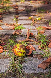 Autumn alley with chestnut Royalty Free Stock Image