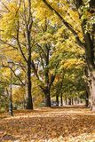 Autumn alley in the city. Romantic landscape Royalty Free Stock Image