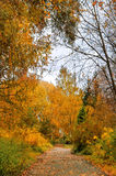Autumn alley in cloudy weather Royalty Free Stock Photo