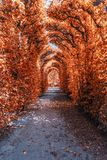in autumn alley royalty free stock photography