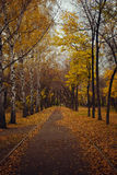 Autumn alley covered with yellow fallen leaves Stock Photo