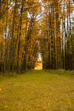 Autumn Alley royalty-vrije stock foto