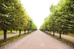 Autumn Alley en St Petersburg Imagen de archivo libre de regalías