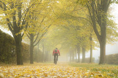 Autumn alley with fallen leaves and mist. Royalty Free Stock Image
