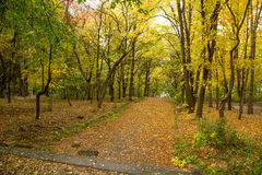 Autumn alley with fallen leaves Stock Photography