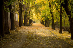 Autumn alley with fallen leaves Royalty Free Stock Photo