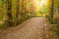 Autumn alley with fallen leaves Royalty Free Stock Photography