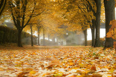 Autumn alley. In the fog Royalty Free Stock Images