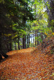 Autumn alley in a forest Stock Photo