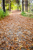 Autumn Alley Royalty Free Stock Photo