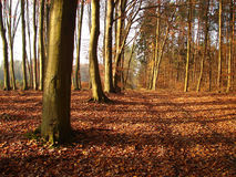 Autumn alley in forest Stock Photo