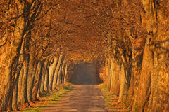 Autumn alley. In golden color Royalty Free Stock Image