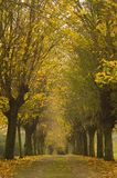 Autumn colored leaves in a long alley stock photos