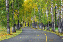 Autumn alley. Alley with autumn leaves. Walking track stock photography