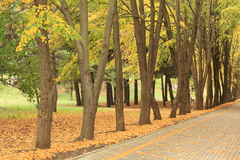 Autumn alley in the park Royalty Free Stock Photography