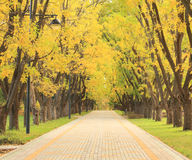 Autumn alley in the park Royalty Free Stock Photos